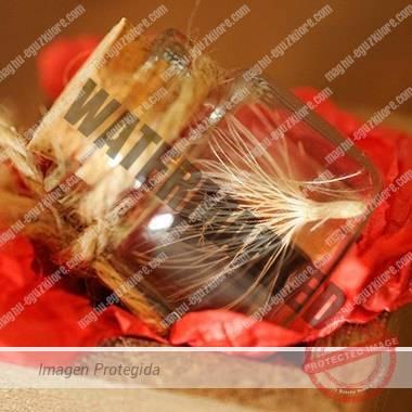 semilla eguzkilore Maghú